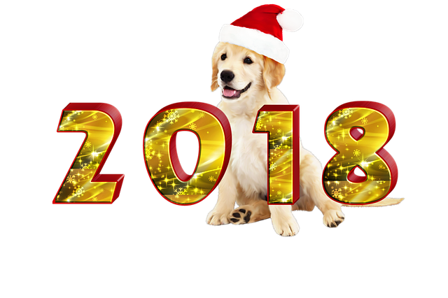 http://zheltok.com/wp-content/uploads/2017/12/new-years-eve-2771139_640.png